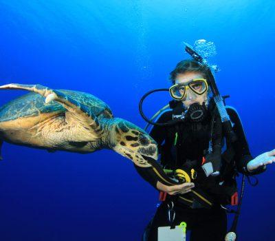 Female,Scuba,Diver,Encounters,Friendly,Hawksbill,Sea,Turtle